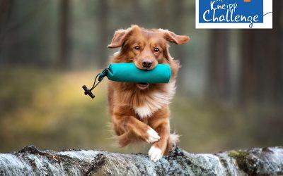 Impuls: BALANCE – Mit dem Hund trainieren